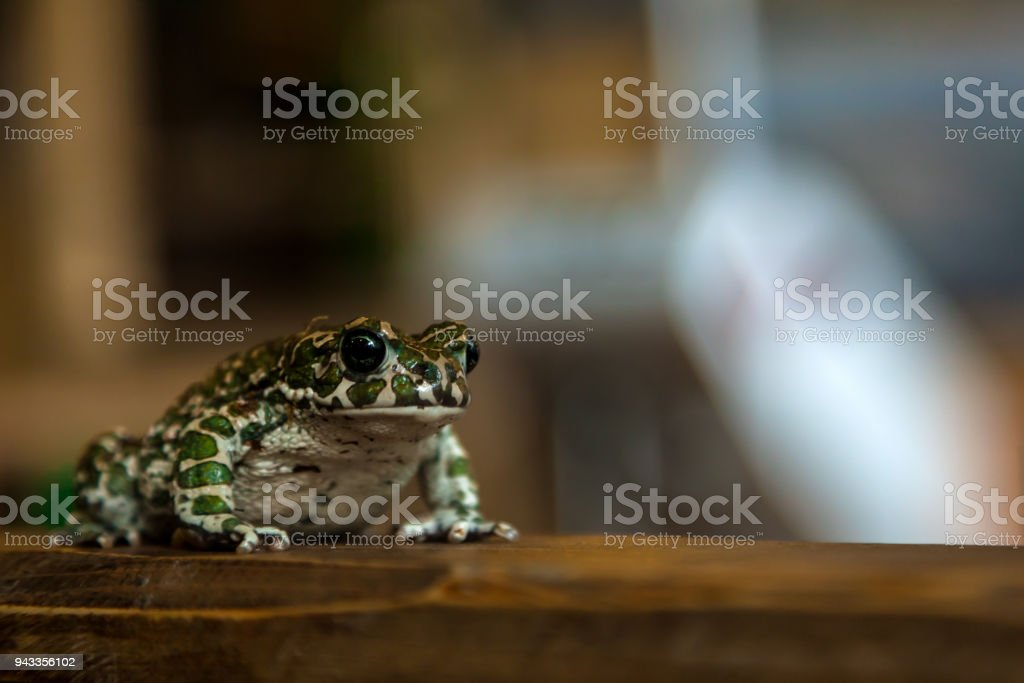 green spotted frog stock photo