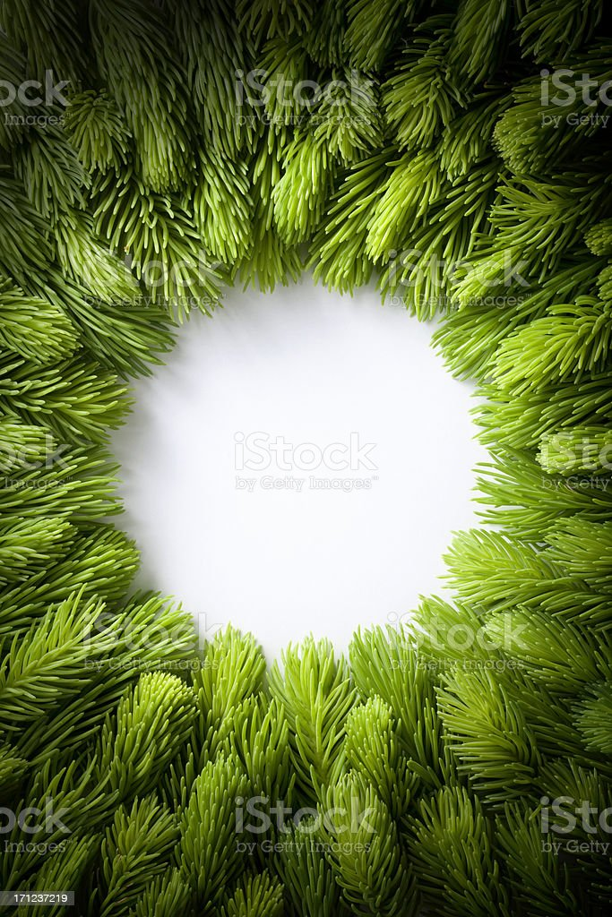 Green sprigs of fir arranged in a circle. royalty-free stock photo