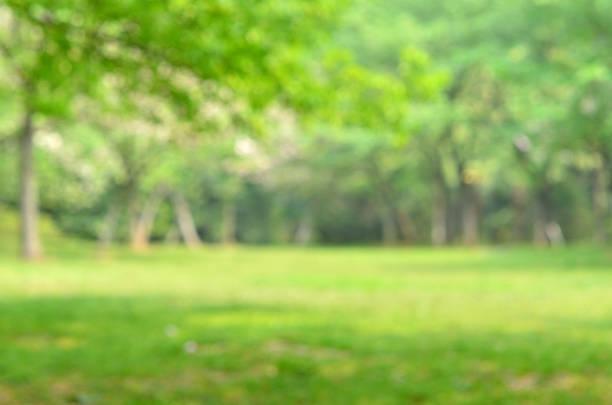 Grün Frühling unscharf abstrakter Hintergrund – Foto