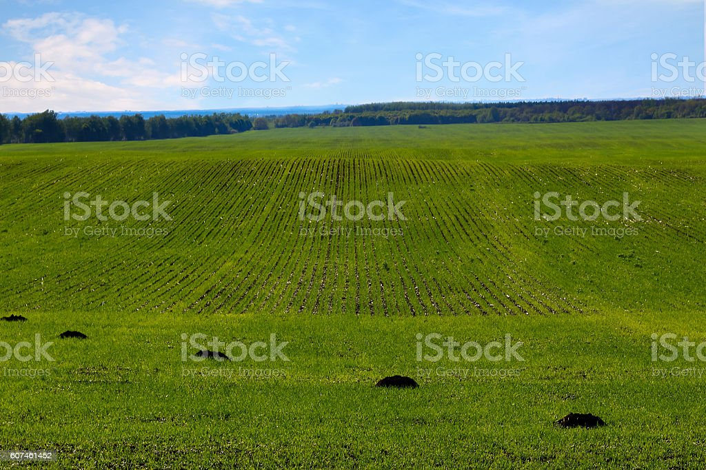 green spring field damaged by mole, vertical background stock photo