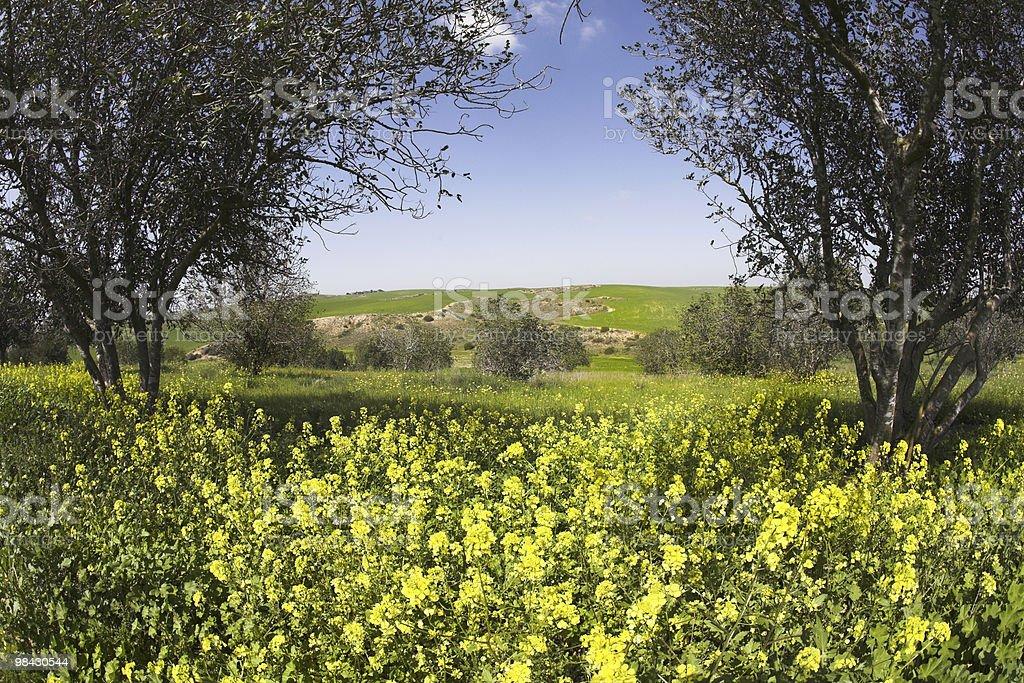 Verde campo di primavera con chamomiles e alberi foto stock royalty-free