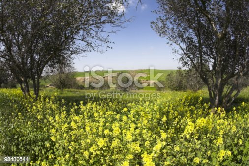Green Spring Field With Chamomiles And Trees Stock Photo & More Pictures of Beauty In Nature