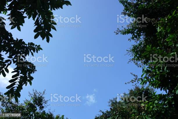 Photo of Green Spring Forest From Below