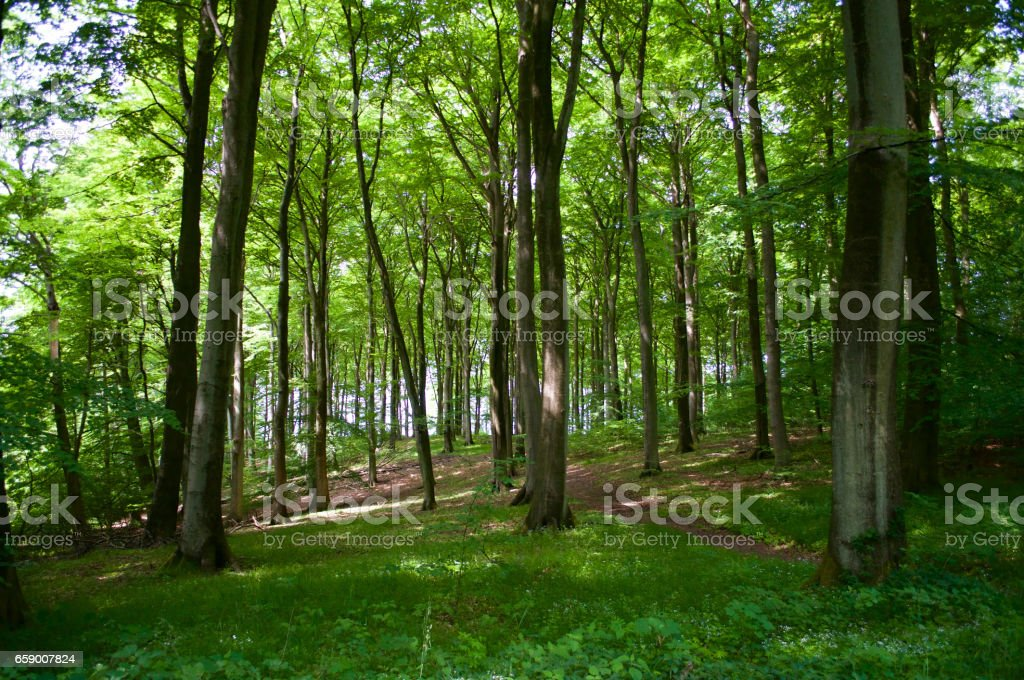 Green Spring Forest royalty-free stock photo