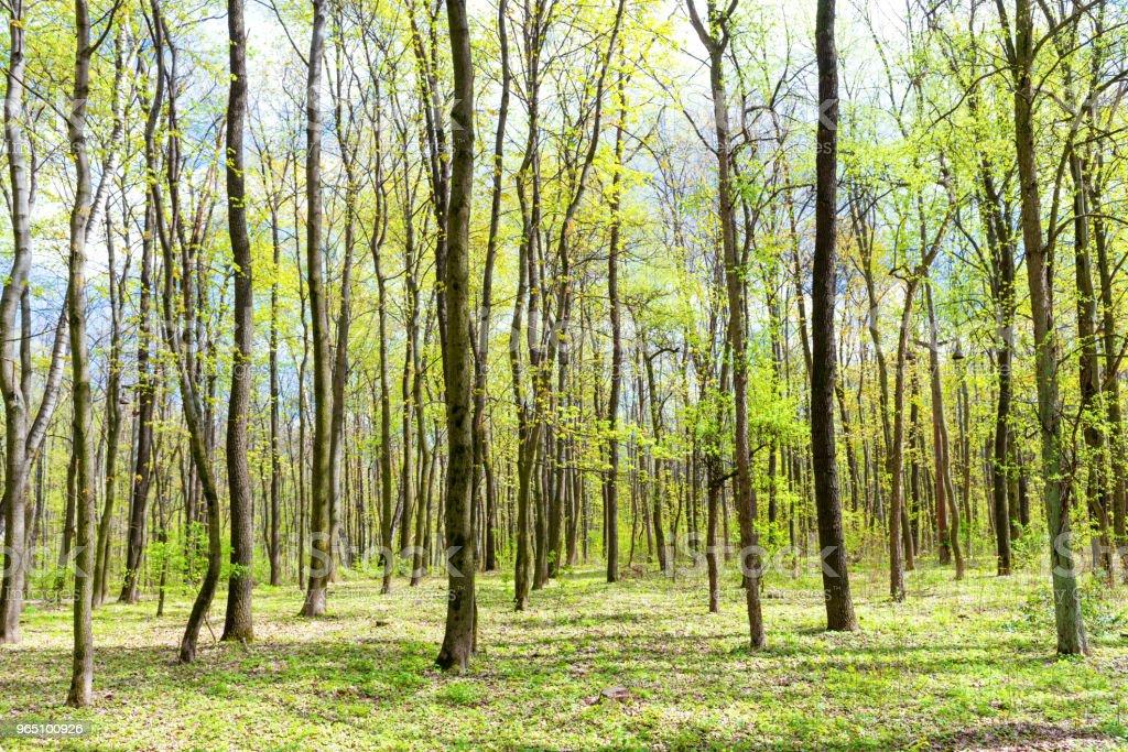 Green spring forest zbiór zdjęć royalty-free