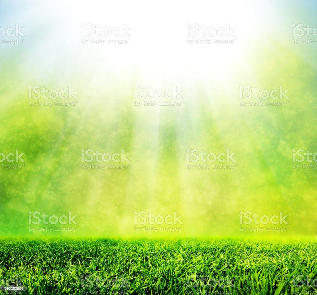 Green spring grass against natural nature blur. Sunny morning light...