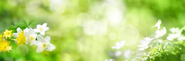 gröna våren landskap - örtmedicin bildbanksfoton och bilder