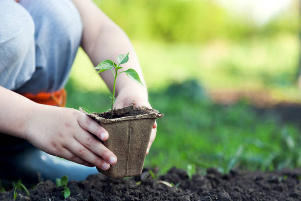 Green Sprout and Children Hands stock photo