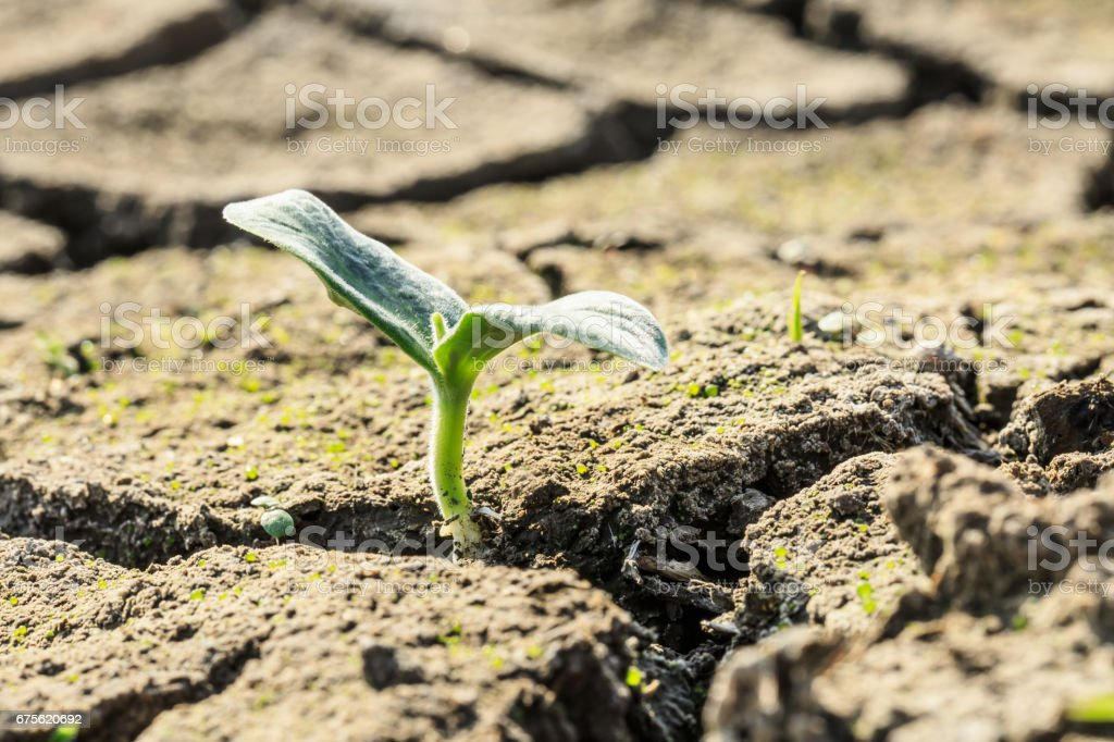 Green sprout grow on dry land royalty-free stock photo