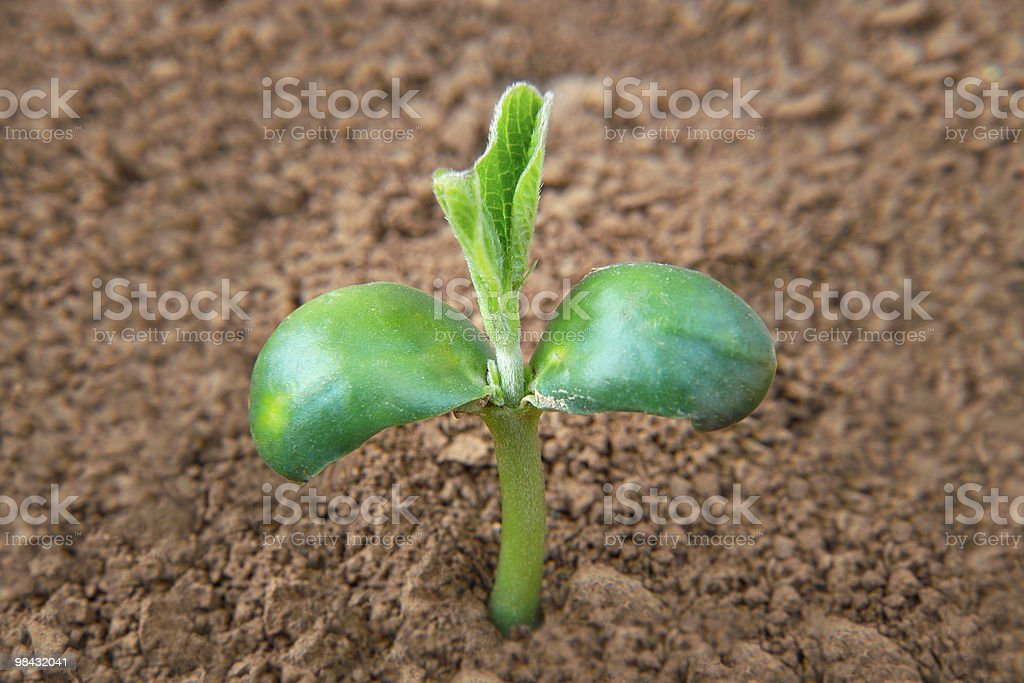 Green sprout growing from soil royalty-free stock photo