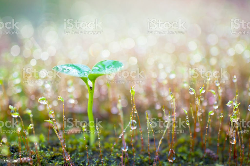 Green sprout growing. - foto stock
