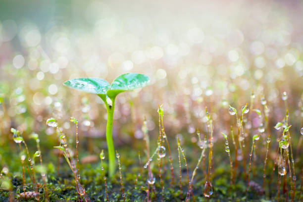 Green sprout growing. stock photo