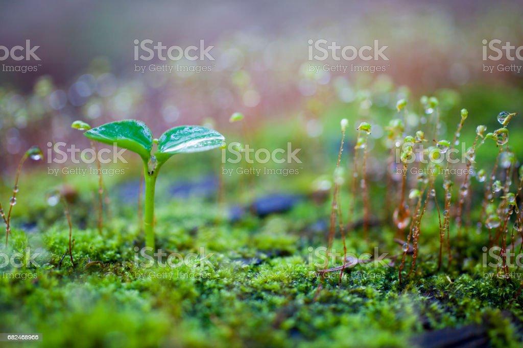 Büyüyen yeşil Filiz royalty-free stock photo