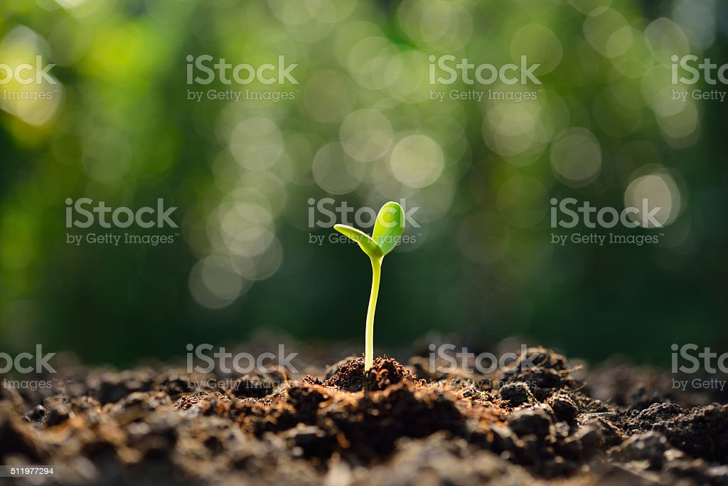 Green sprout royalty-free stock photo