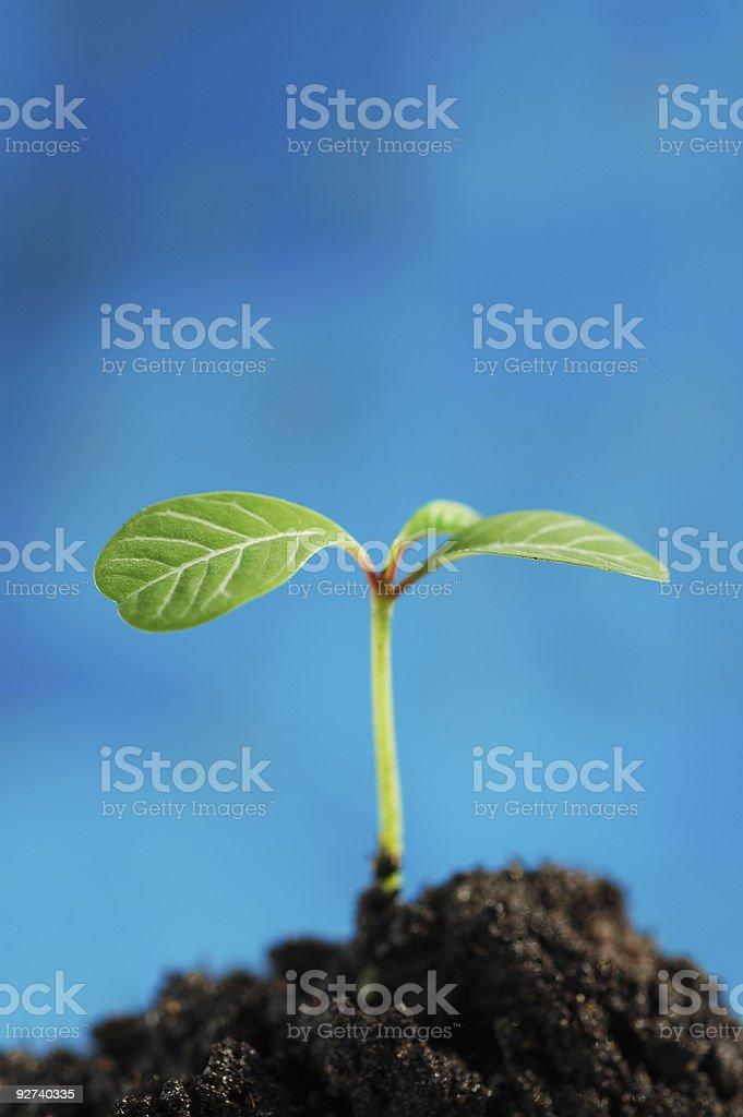 Green sprout Lizenzfreies stock-foto