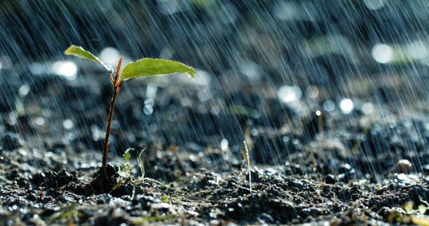 vert de pousses sous la pluie - pluie photos et images de collection