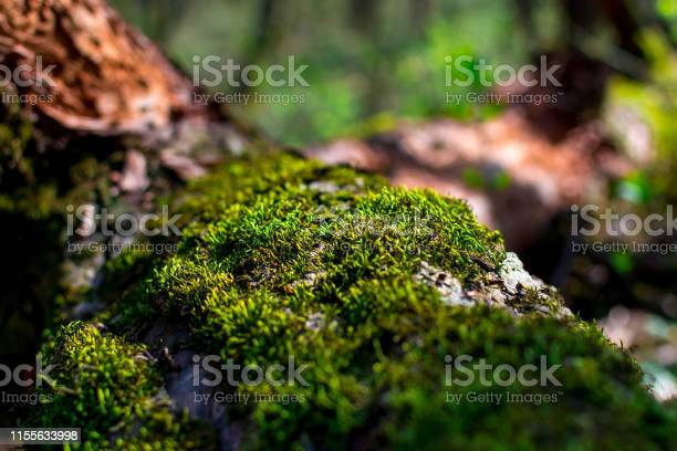 Photo of Green sprouts of moss closeup on a tree on a sunny summer day, selective focus, background