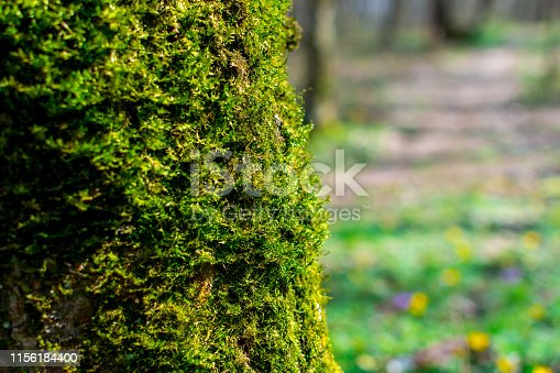 Green sprouts of moss closeup on a tree on a sunny summer day, selective focus, background.