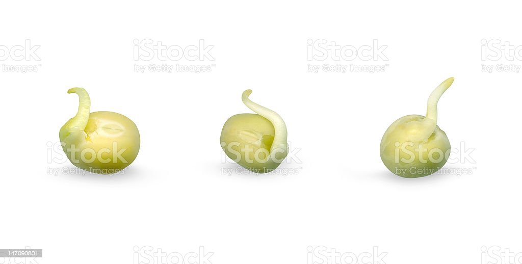 green sprouts royalty-free stock photo