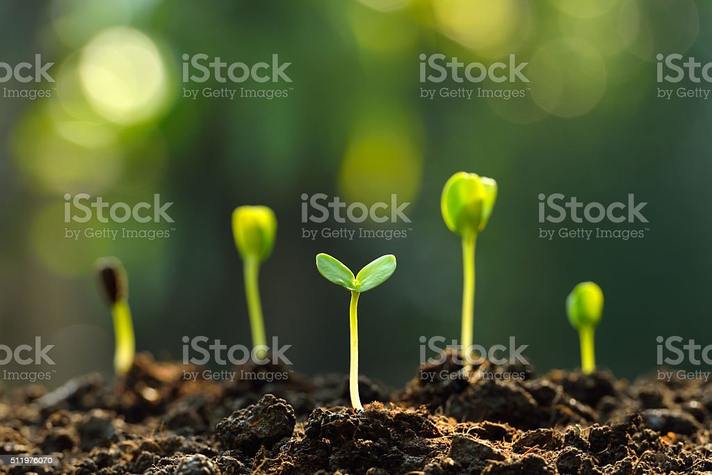 Green sprouts - Royalty-free Begin Stockfoto