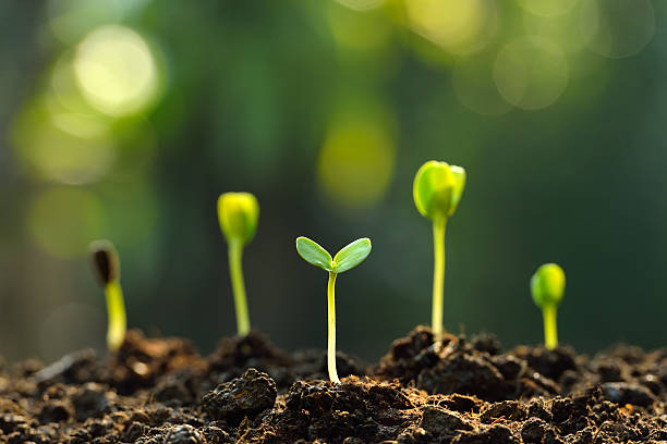 Green sprouts Group of green sprouts growing out from soil cultivated land stock pictures, royalty-free photos & images