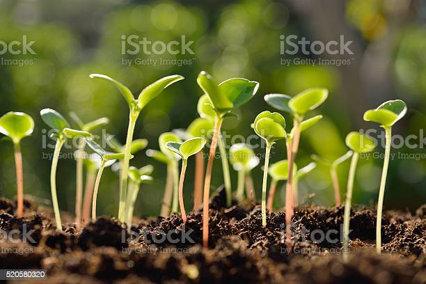 Photo of Green sprouts
