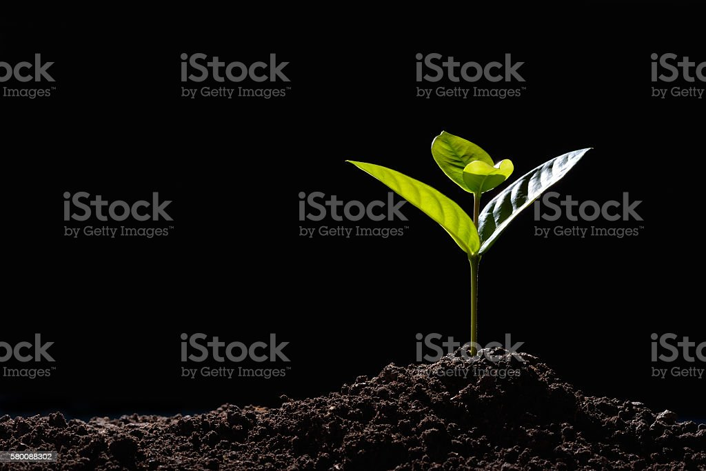 sprouts verde  - foto de stock