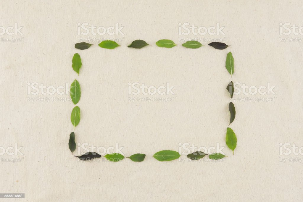 Green square wreath made from basil leaves stock photo