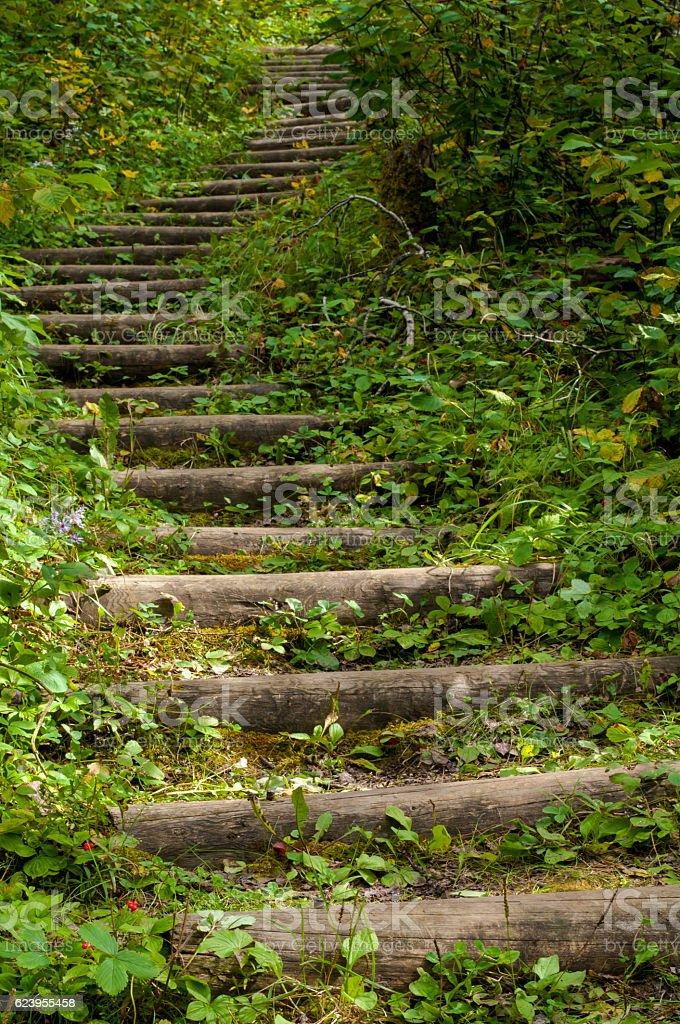 Green Stairs stock photo