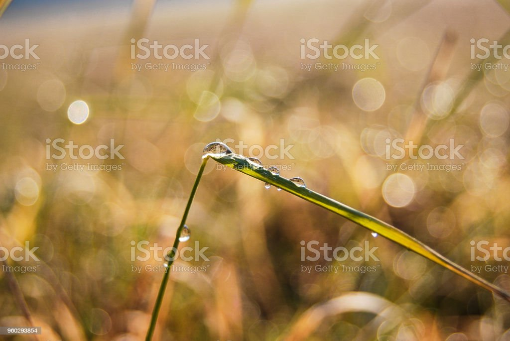 Green straw thread with drops stock photo
