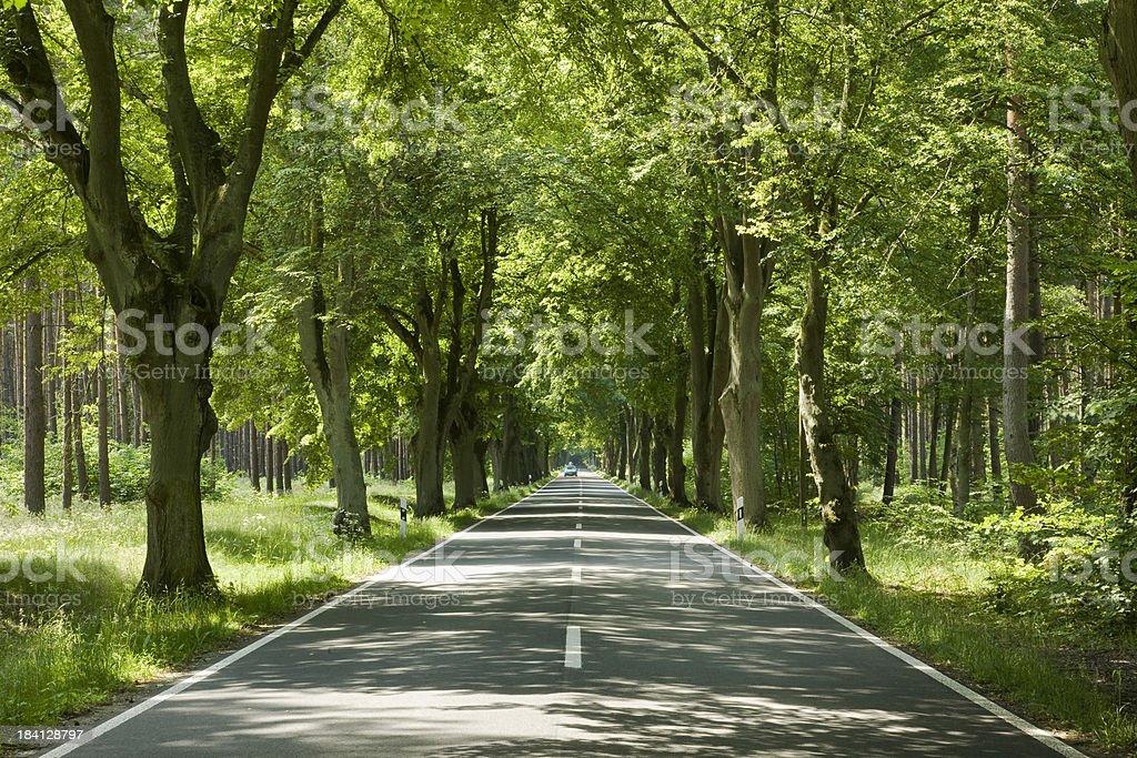 green street, royalty-free stock photo