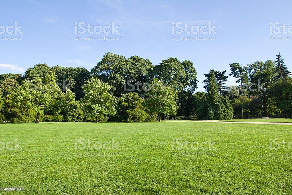 Verde, listrado em gramado no parque - foto de acervo