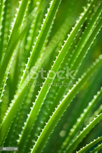 Green Succulent Plant Stock Photo & More Pictures of Abstract