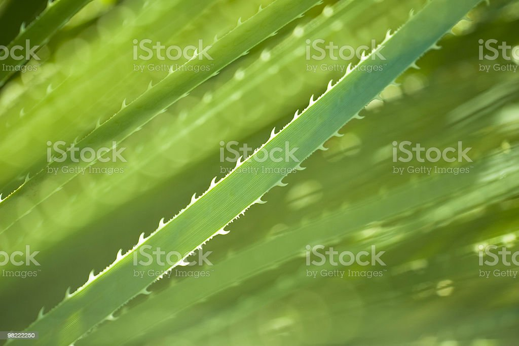 Green Succulent Plant royalty-free stock photo