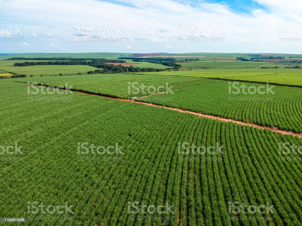Green sugar cane field on Sao Paulo state, Brazil - Foto stock royalty-free di Affari