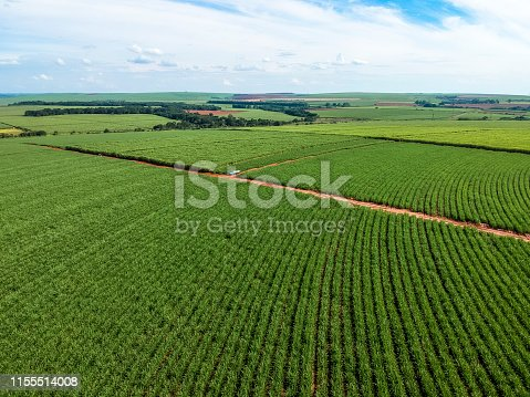 Green sugar cane field on Sao Paulo state, Brazil