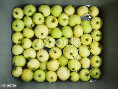 A pile of green summer apples floating in water in a gray kitchen sink