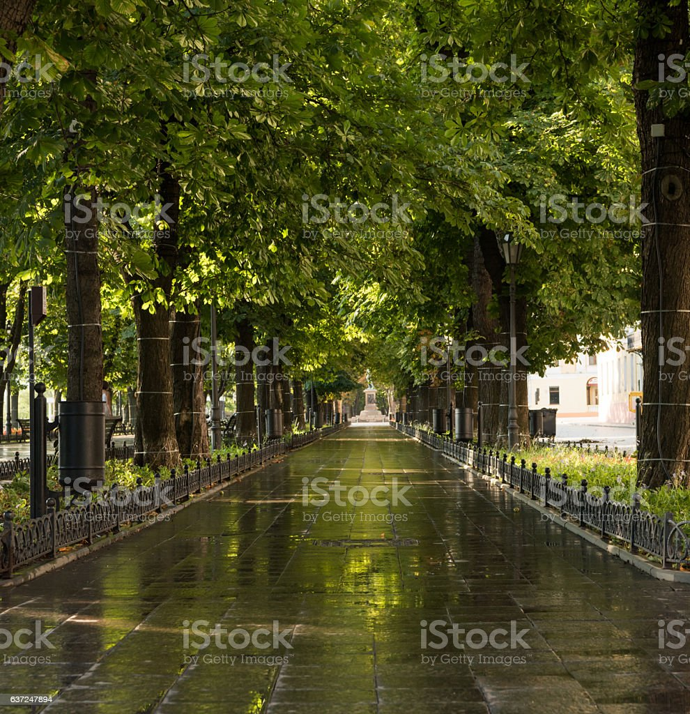 green summer city park in the morning stock photo