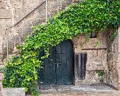 Green summer Ivy frames old wooden cellar door