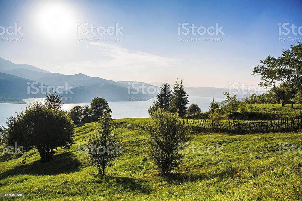 Green Summer Nature royalty-free stock photo