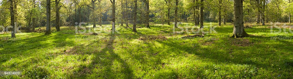 Green sunlit glade royalty-free stock photo