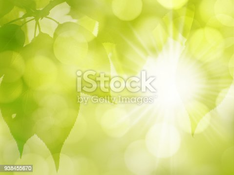 istock Green sunny leaves nature background in spring and summer 938455670