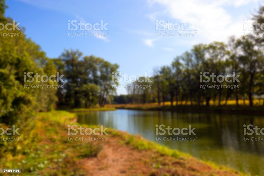 green swamp, close-up stock photo