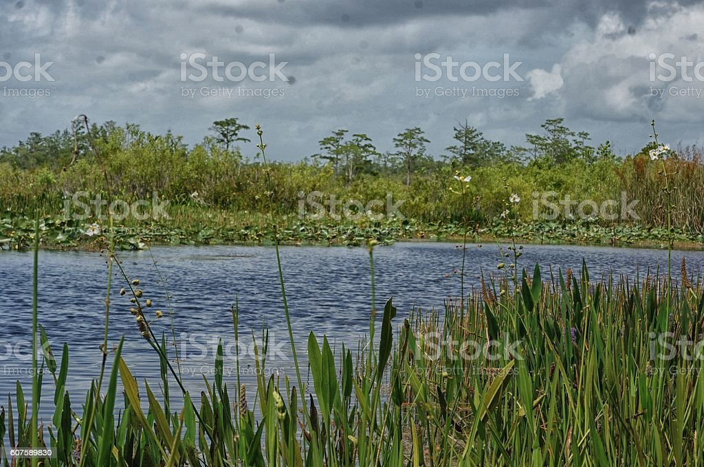 green swamp plants and the river stock photo