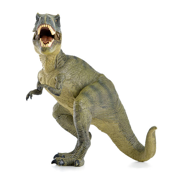 a green t rex dinosaur with its mouth open white background - tyrannosaurus rex stock photos and pictures