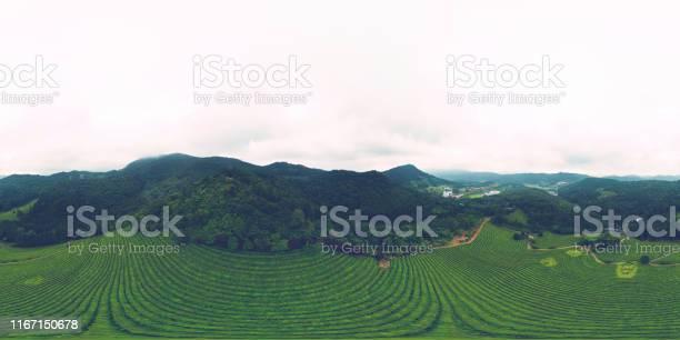 Green tea farm 360 degrees panorama aerial view after rain picture id1167150678?b=1&k=6&m=1167150678&s=612x612&h=mh6xil4itw0ttw5azqo0sqemrkdihpdt9cqekzt9w8m=