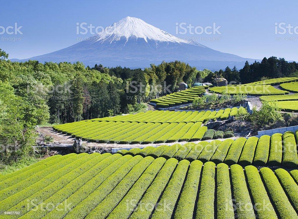 Green tea Felder IV - Lizenzfrei Agrarbetrieb Stock-Foto