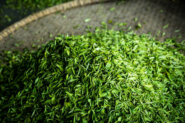 green tea in a flat round basket - tea leaf stock photos and pictures