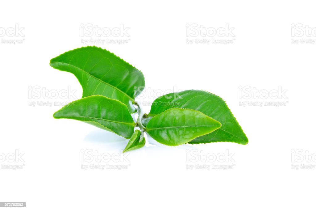Green tea leaf isolated on white background photo libre de droits