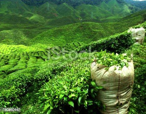 istock green tea plantation 160860442